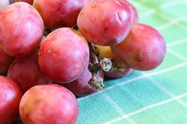 globe grapes