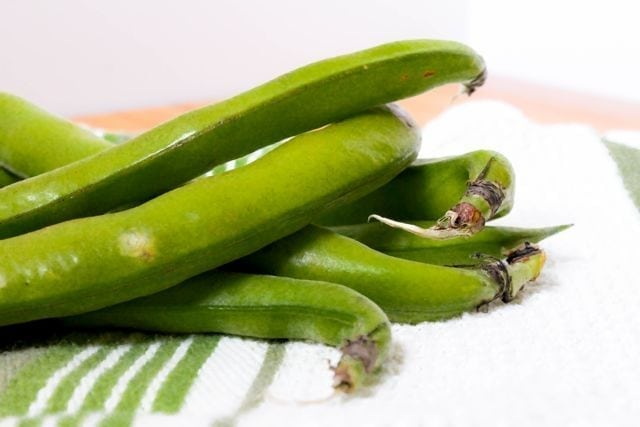 fava beans in pods