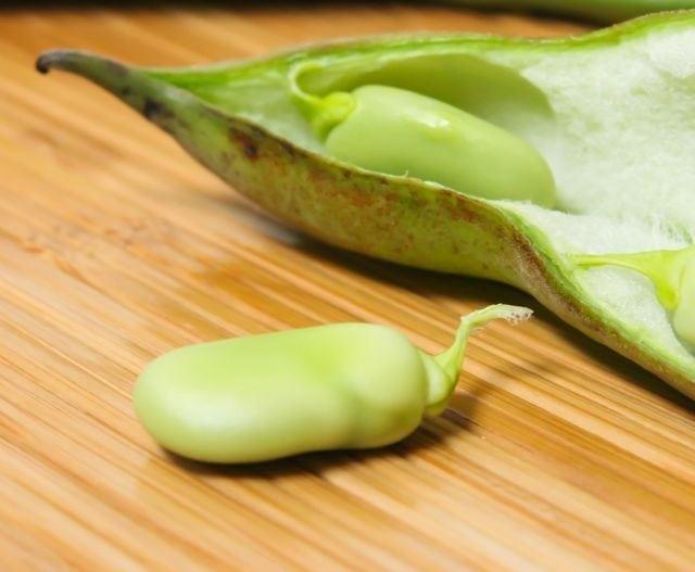 raw fava bean