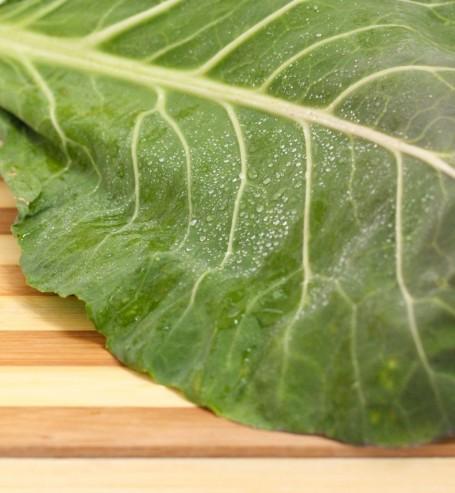 wet collard green leaf