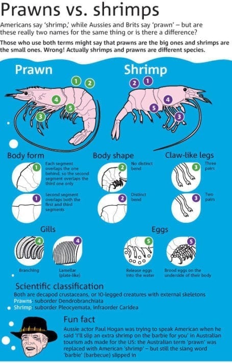 Prawns vs Shrimp