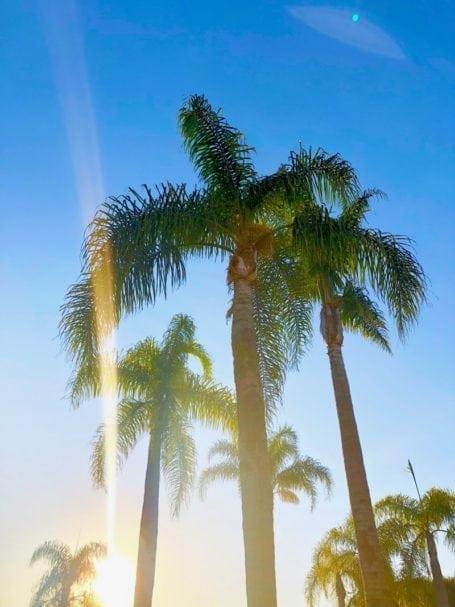 Summer in LA - Angela Simpson