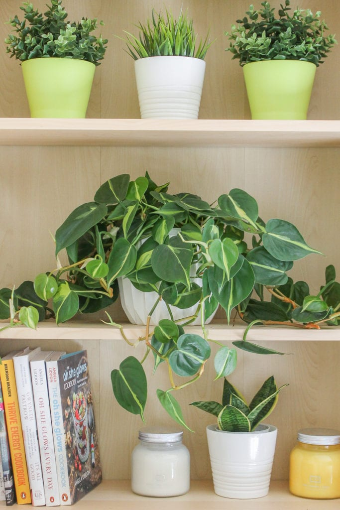 Philodendron - Top 8 low maintenance house plants for beginners - My Fresh Perspective