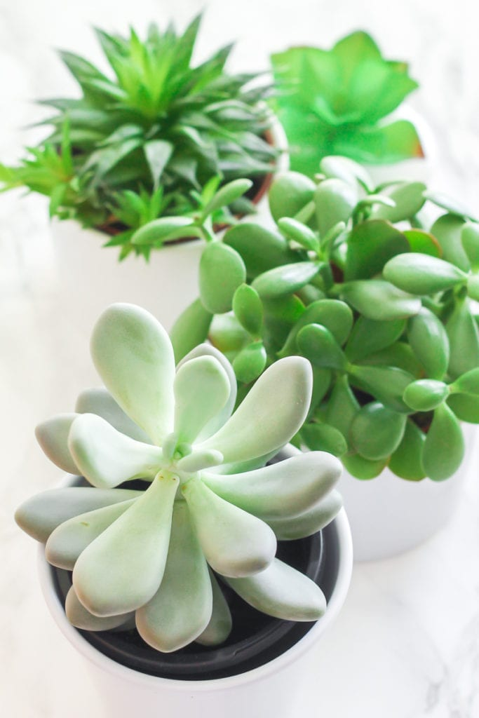 Succulents - Top 8 low maintenance house plants for beginners - My Fresh Perspective